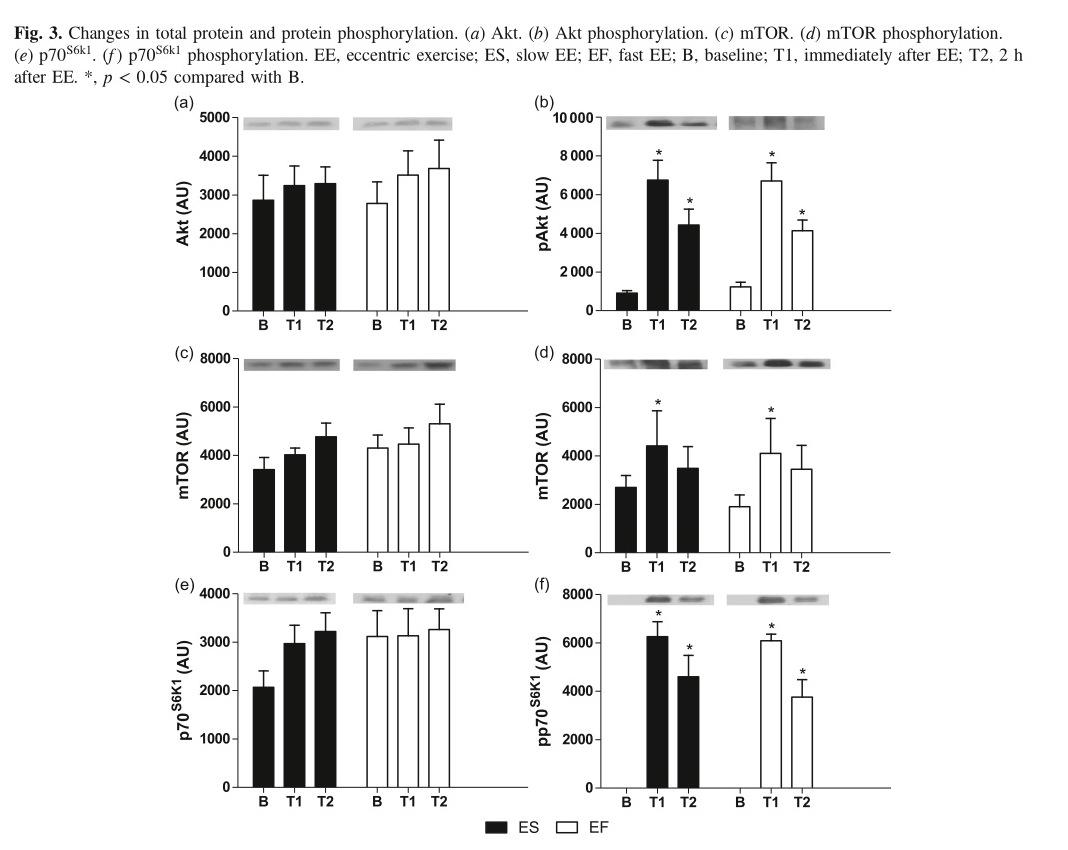 Ejercicio excéntrico (más lento) podría no ser más productivo Eccentricvelocity