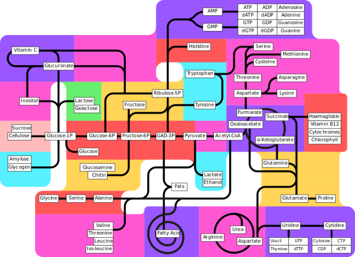 Metabolism_pathways