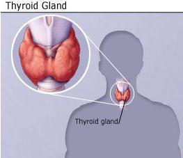 Thyroid_Gland