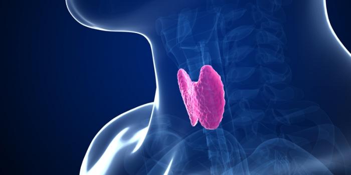 thyroid-demylination