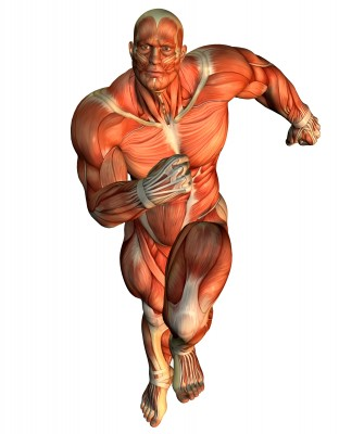 muscle-running